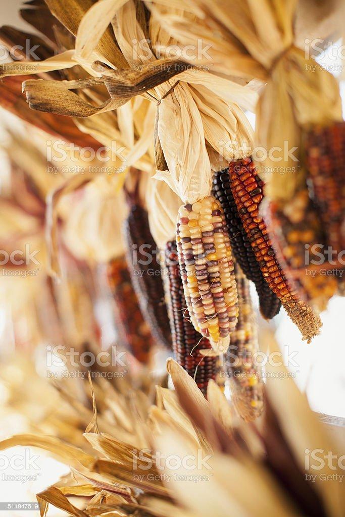 Hanging Indian Corn stock photo