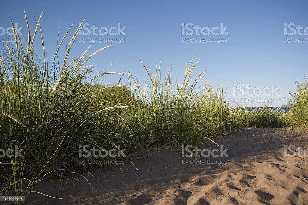 Promenades sur la plage photo libre de droits