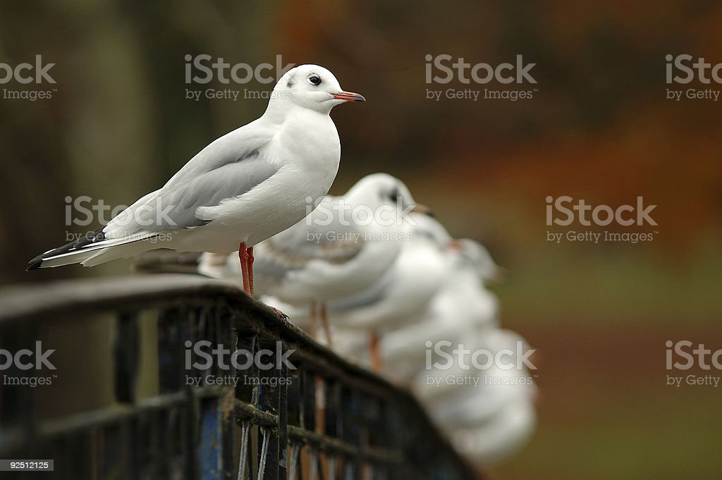 Hanging out on the bridge royalty-free stock photo