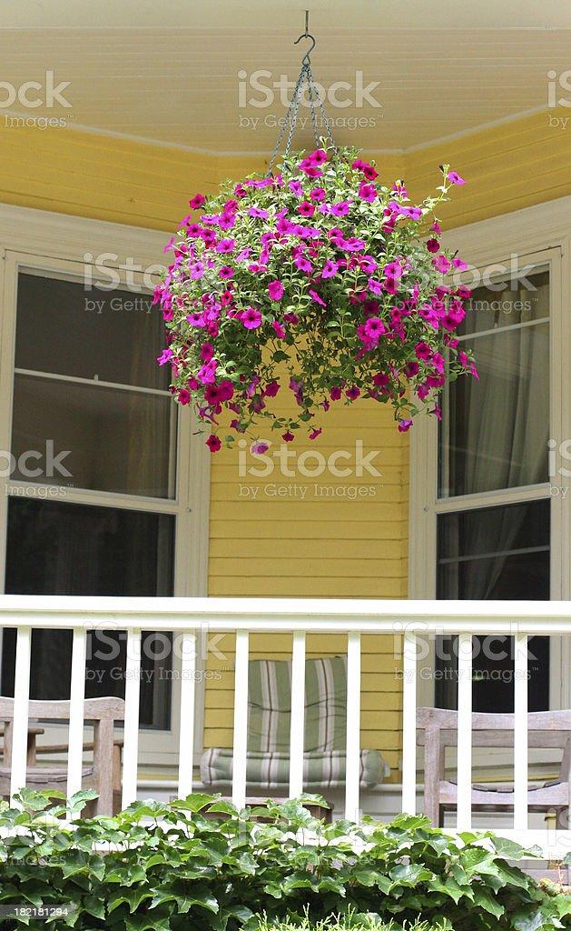 Hanging Plant stock photo