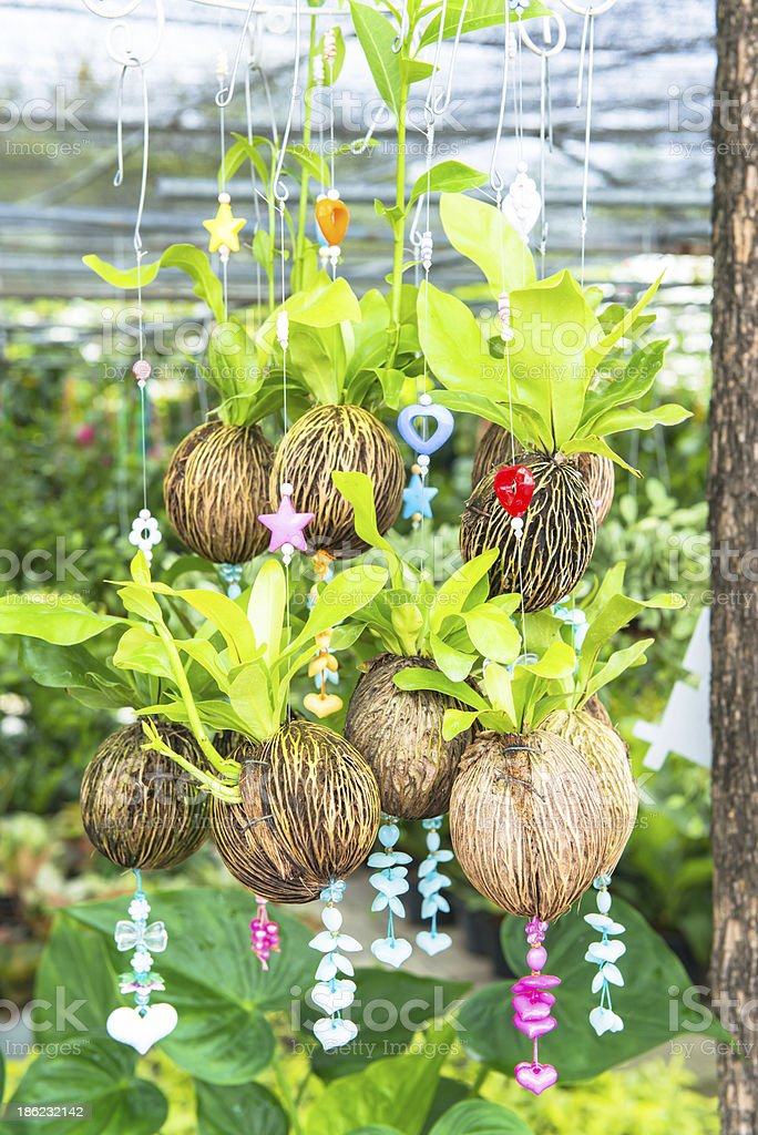 Hanging plantation royalty-free stock photo