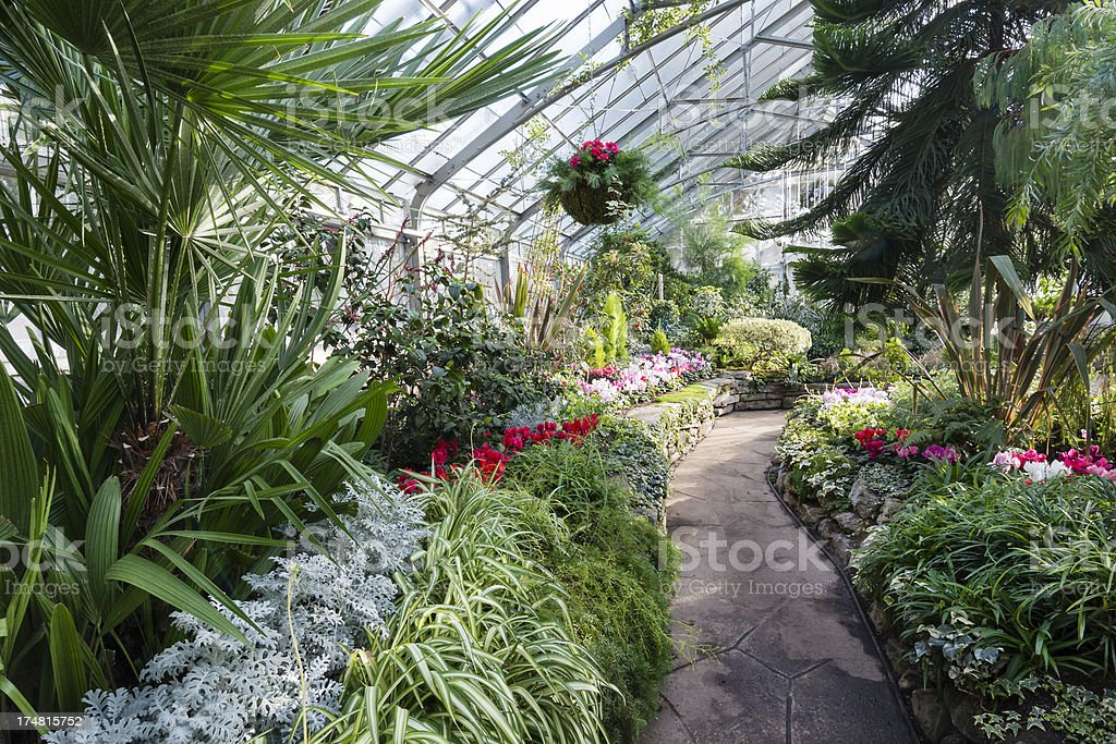 Hanging Plants in the Greenhouse royalty-free stock photo
