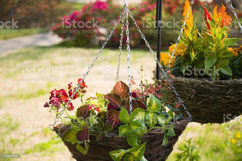 Hanging Plants royalty-free stock photo