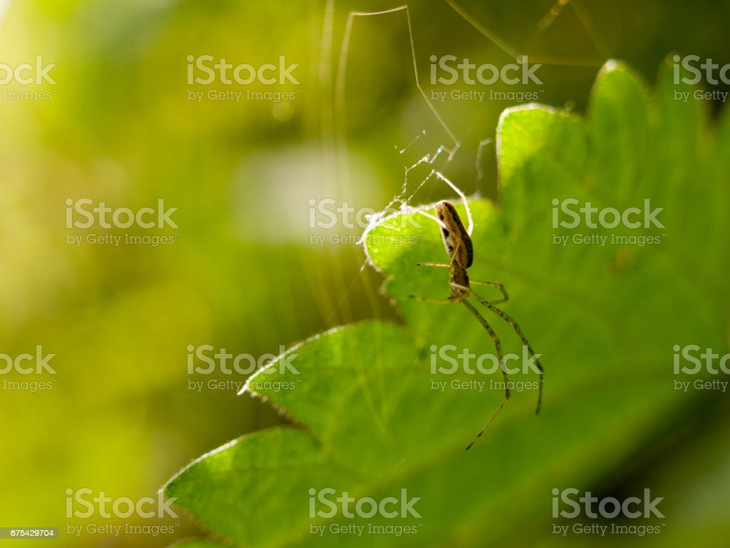 hanging spider in spring with leaf background stock photo