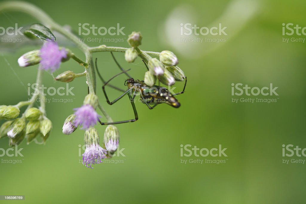 Hangover spider royalty-free stock photo