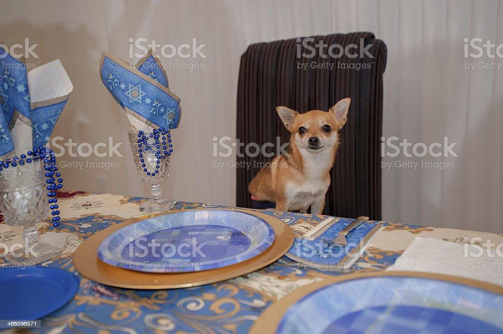 Hanukah dog at the dinner table royalty-free stock photo