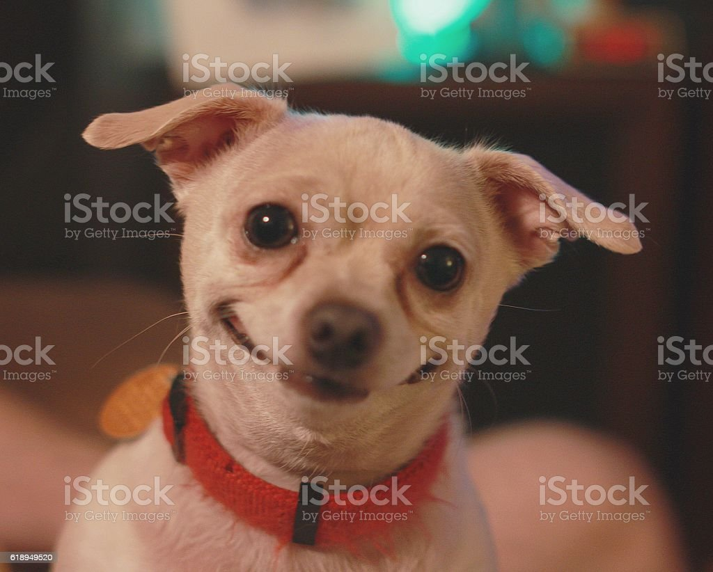 Happiest dog in the world stock photo