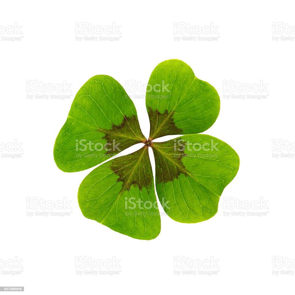 Happiness Clover - Cutting Path - Isolated stock photo
