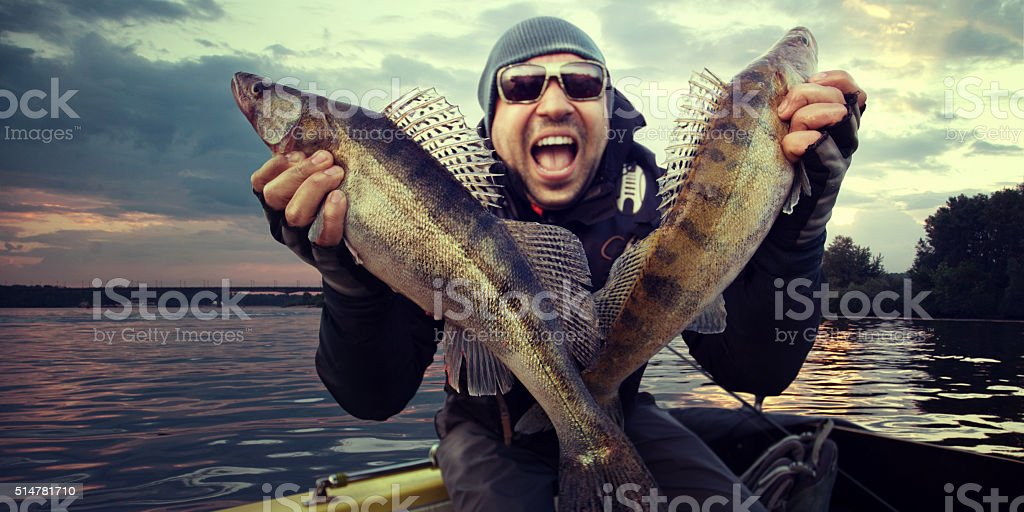 Happy angler with zander fishing trophy stock photo