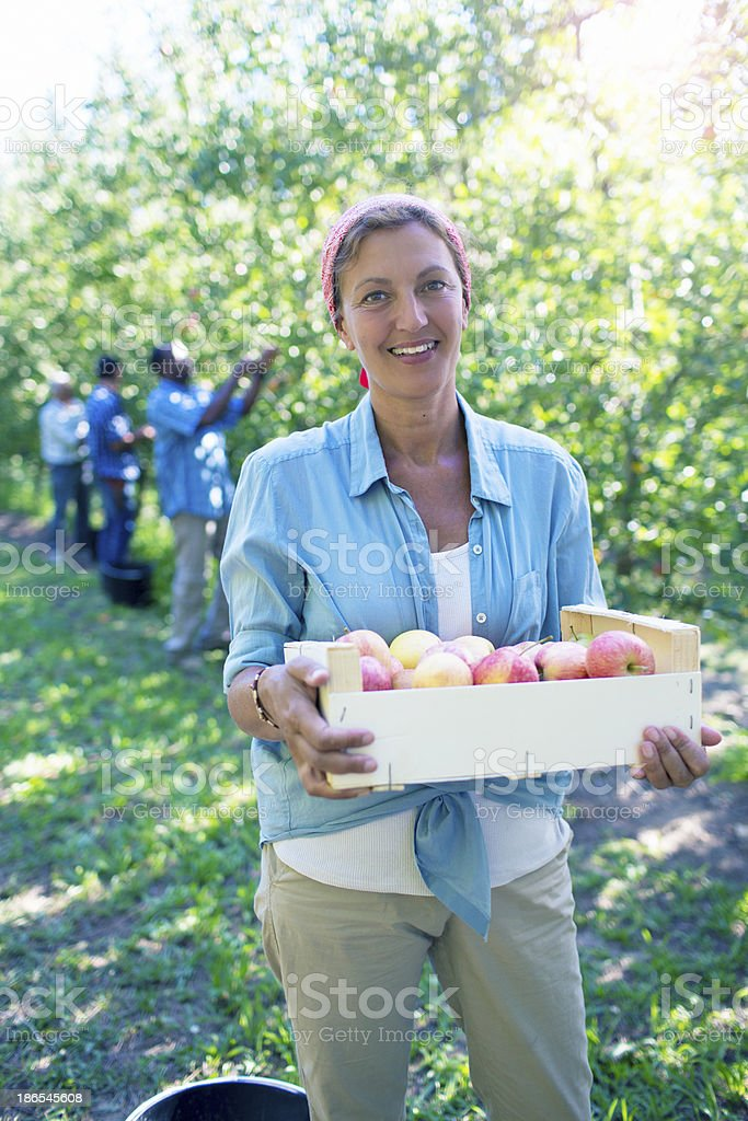 Happy Apple harvesting stock photo