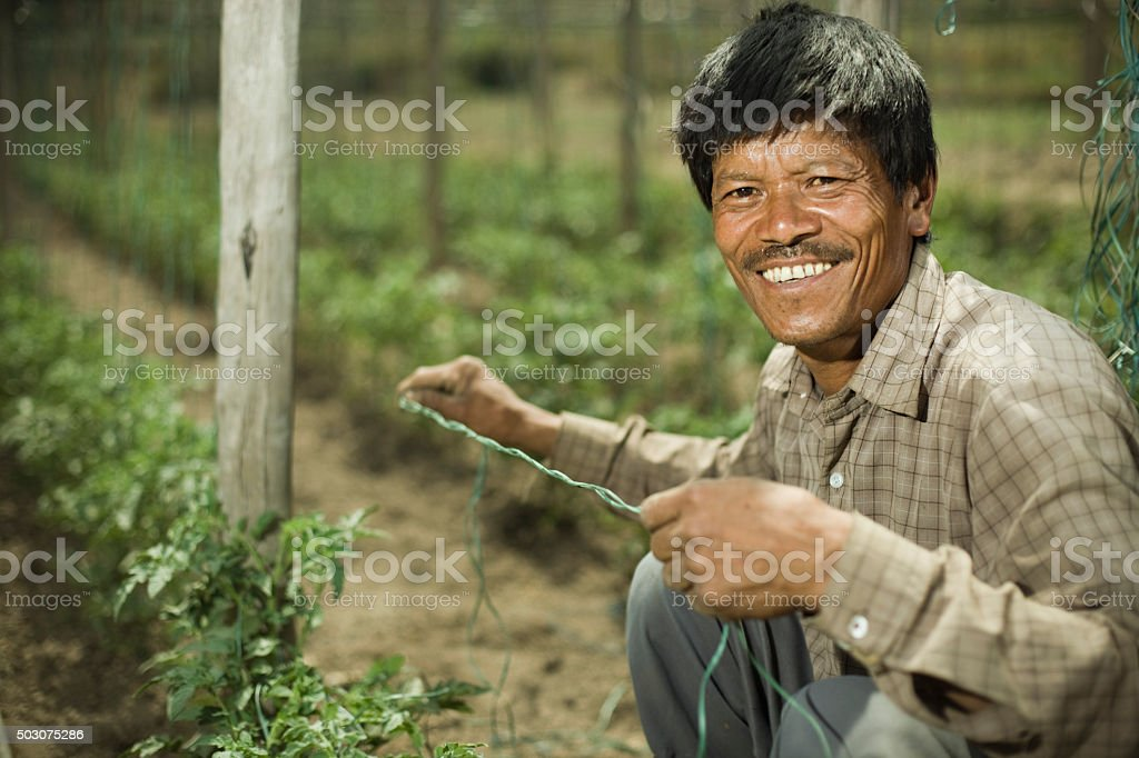 Happy Asian peasant man in tomato farm, looking at camera. stock photo