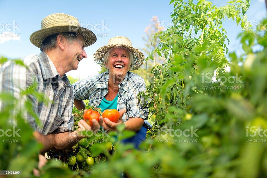 happy austrian retirees in tomato field royalty-free stock photo