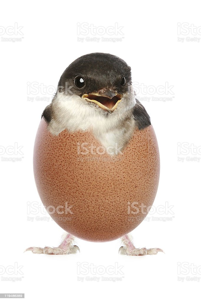 Happy baby bird hatched from egg stock photo
