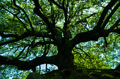Happy big tree
