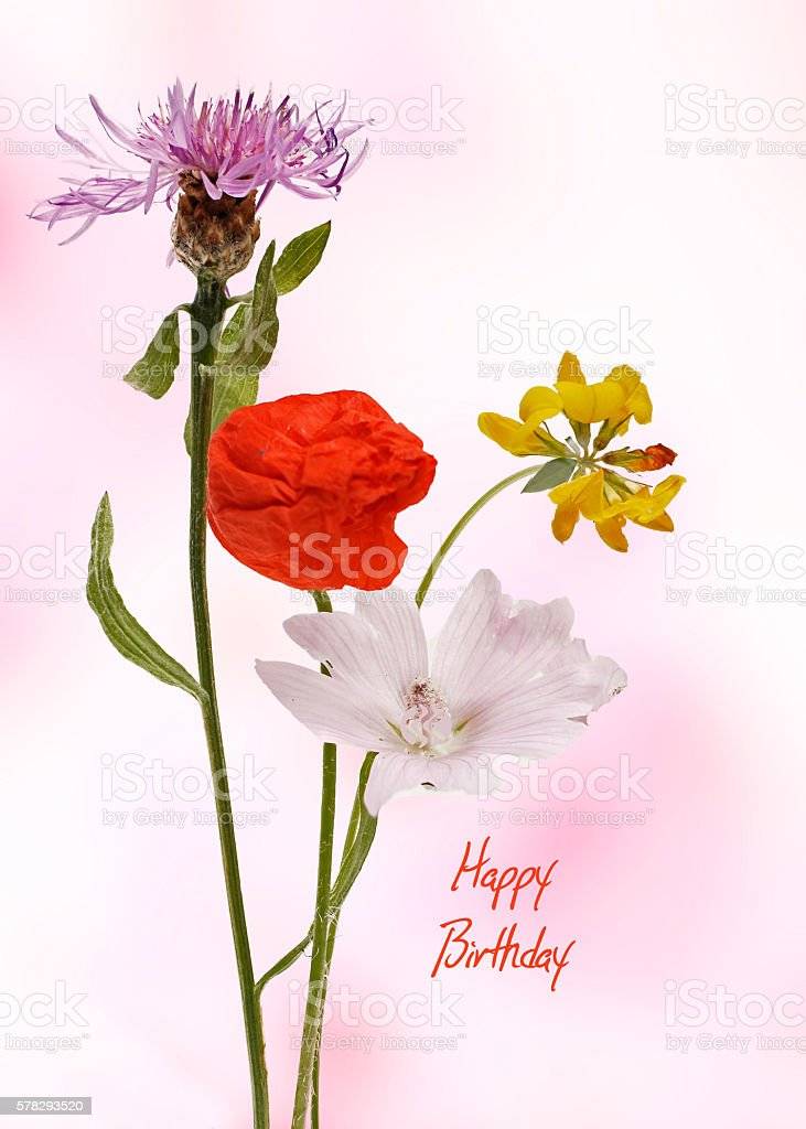 Happy Birthday card with colorful wildflowers stock photo