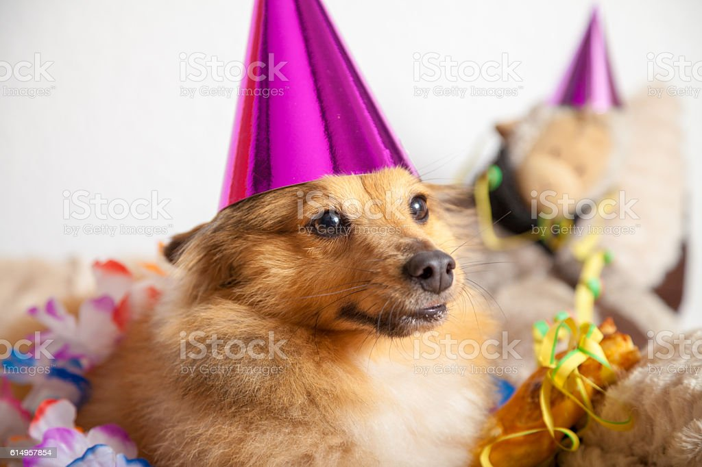 happy birthday dog makes party in his basket stock photo