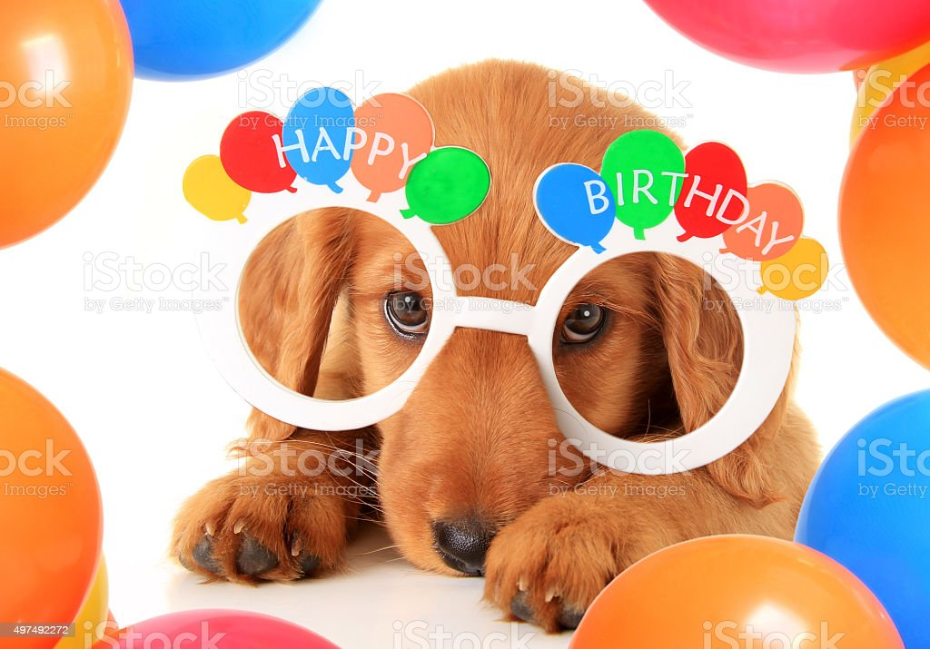 Happy Birthday puppy stock photo