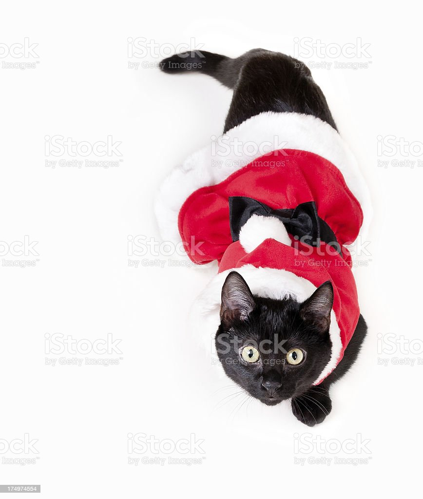 Happy Black Kitten in Santa Claus Costume stock photo