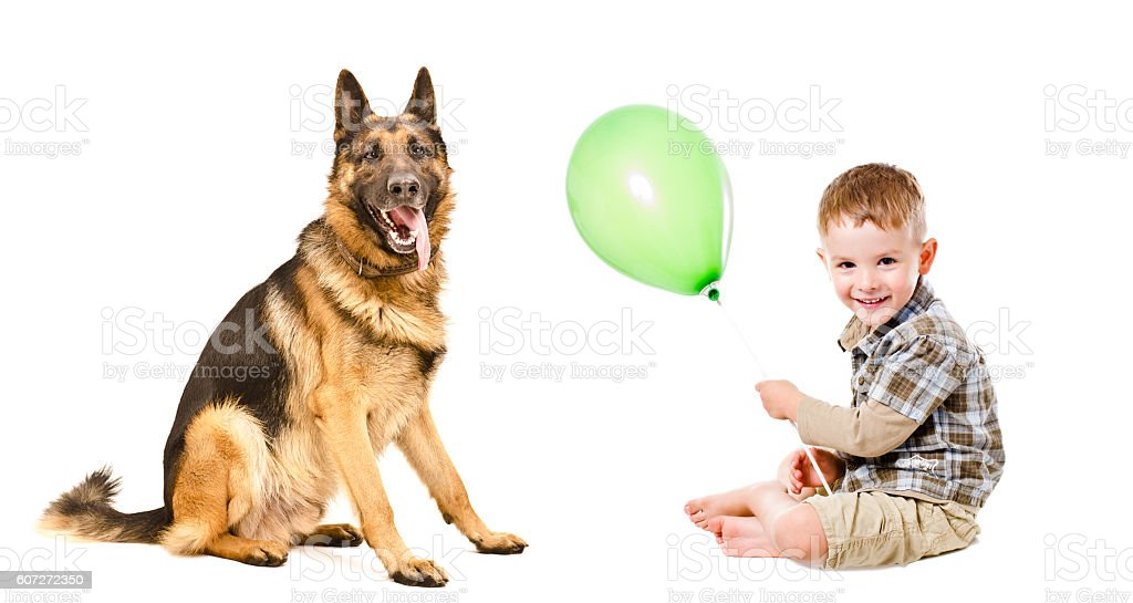 Happy boy and German Shepherd playing with a balloon stock photo