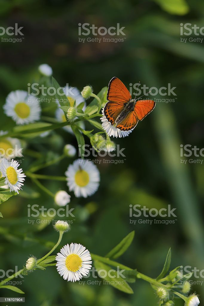 Happy butterfly royalty-free stock photo