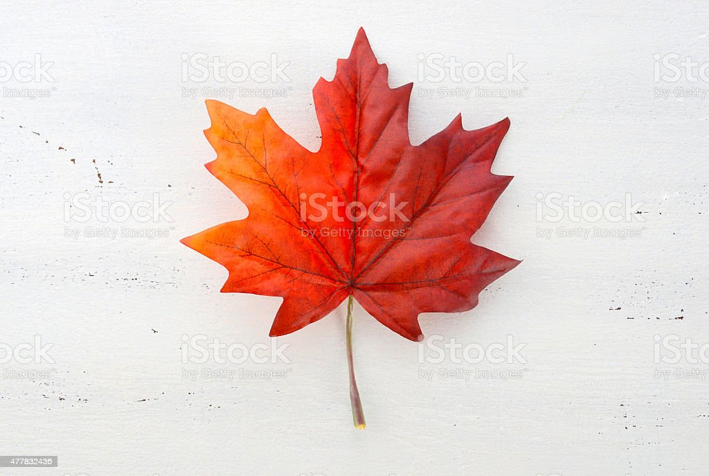 Happy Canada Day red silk maple leaf stock photo