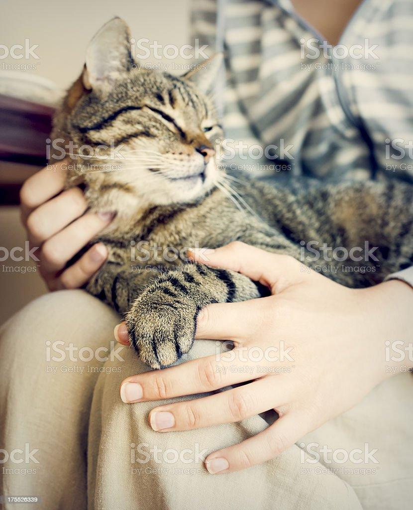 Happy cat lying on woman's laps. stock photo