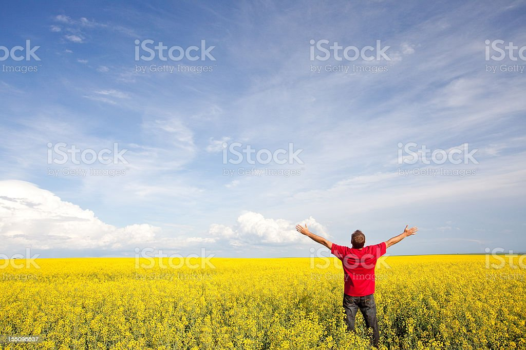 Happy Caucasian Man in Canola Field royalty-free stock photo