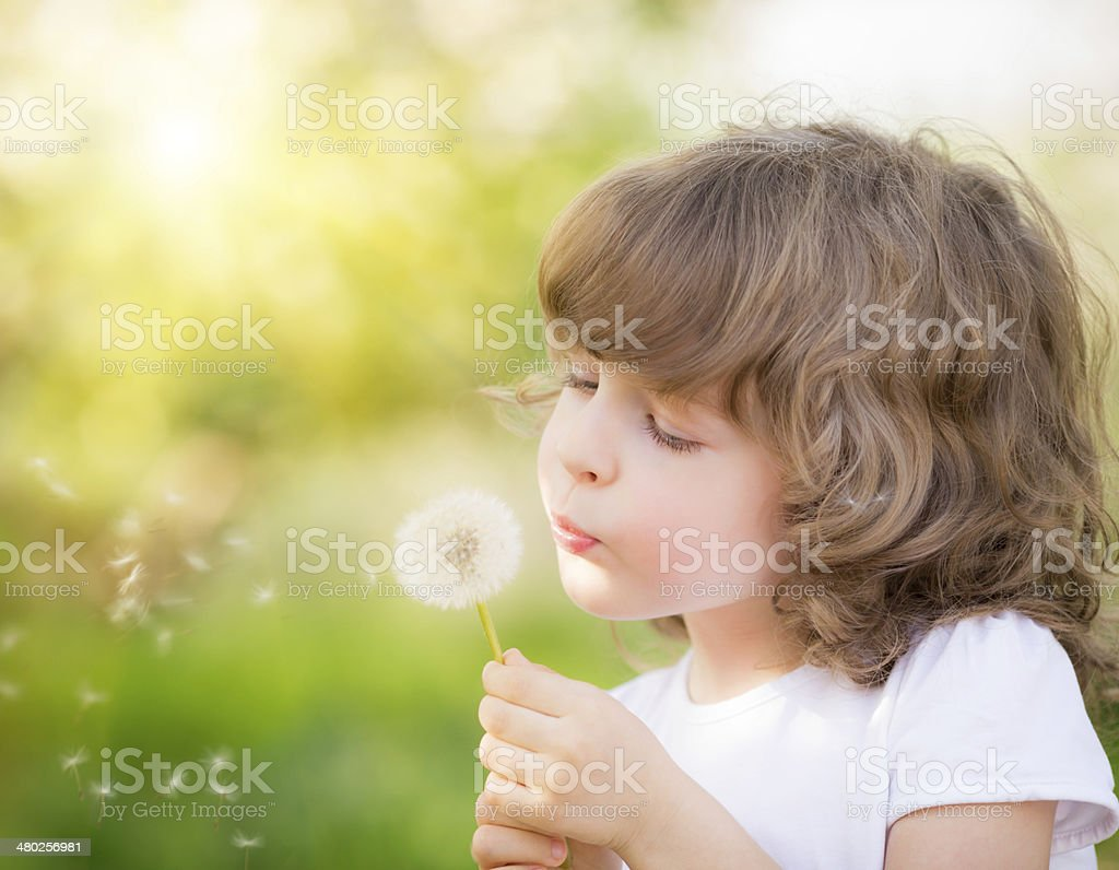 Happy child blowing dandelion stock photo