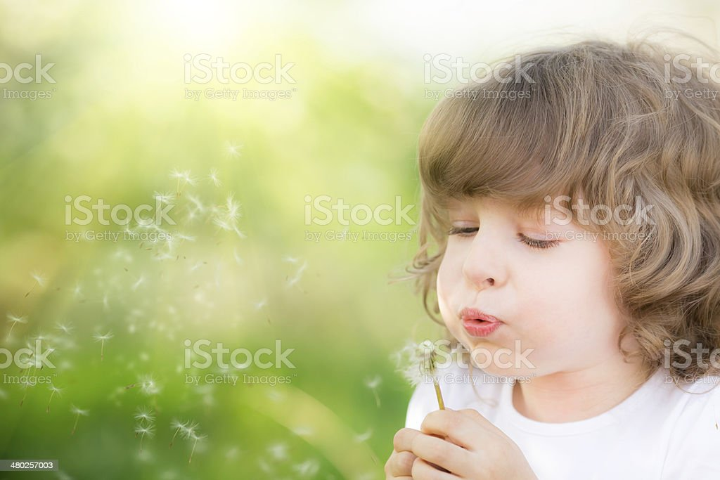 Happy child blowing dandelion stock photo