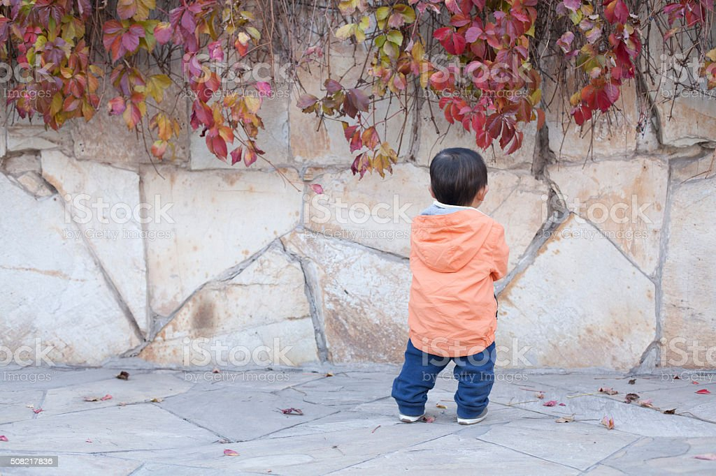 Happy Chinese baby boy standing in front of Boston Ivy stock photo
