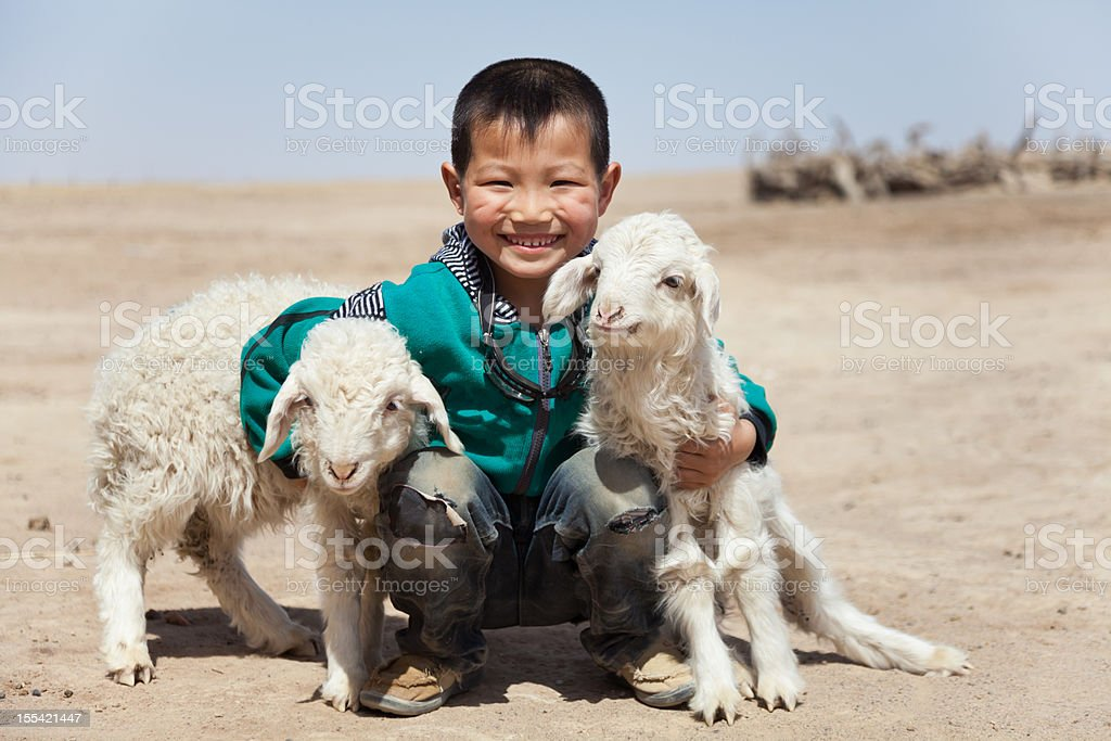 Happy Chinese boy with his lambs outdoor stock photo