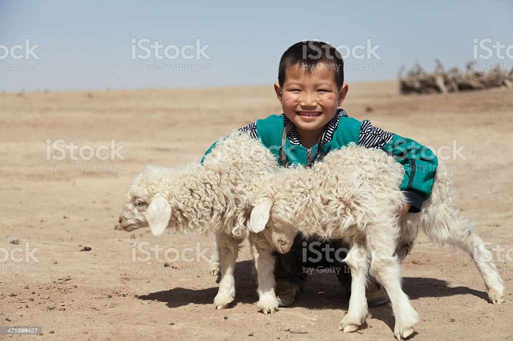 Happy Chinese boy with his lambs outdoor蹲 stock photo