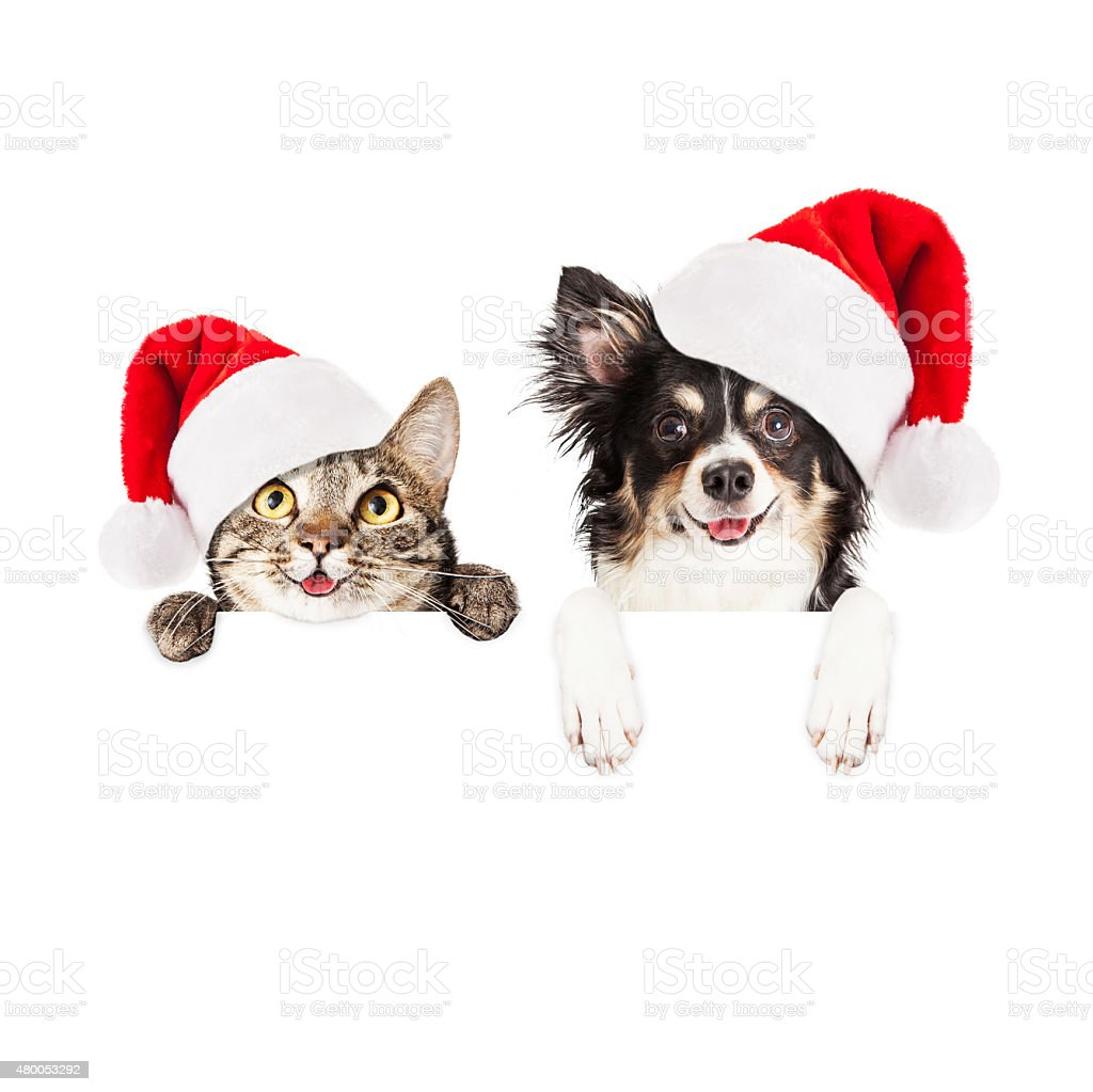 Happy Christmas Dog and Cat Over White Banner stock photo
