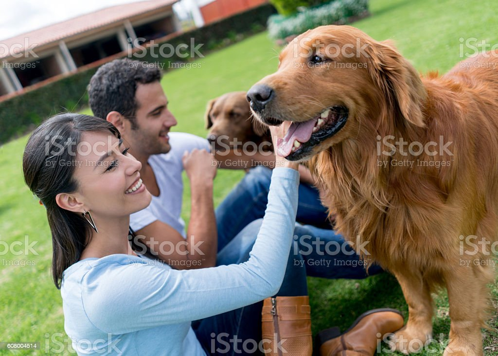 Happy couple pampering dogs stock photo