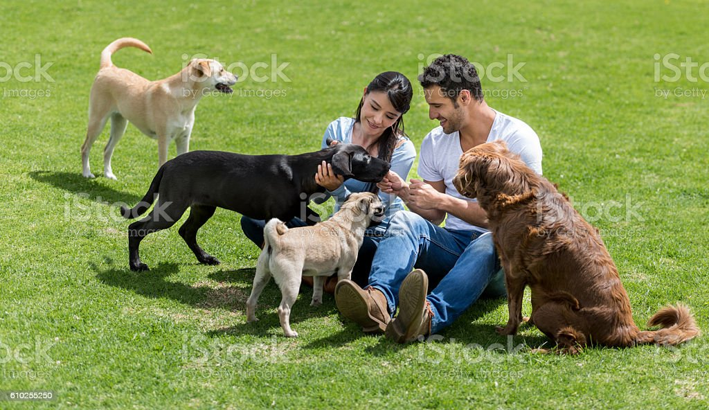 Happy couple playing with dogs stock photo