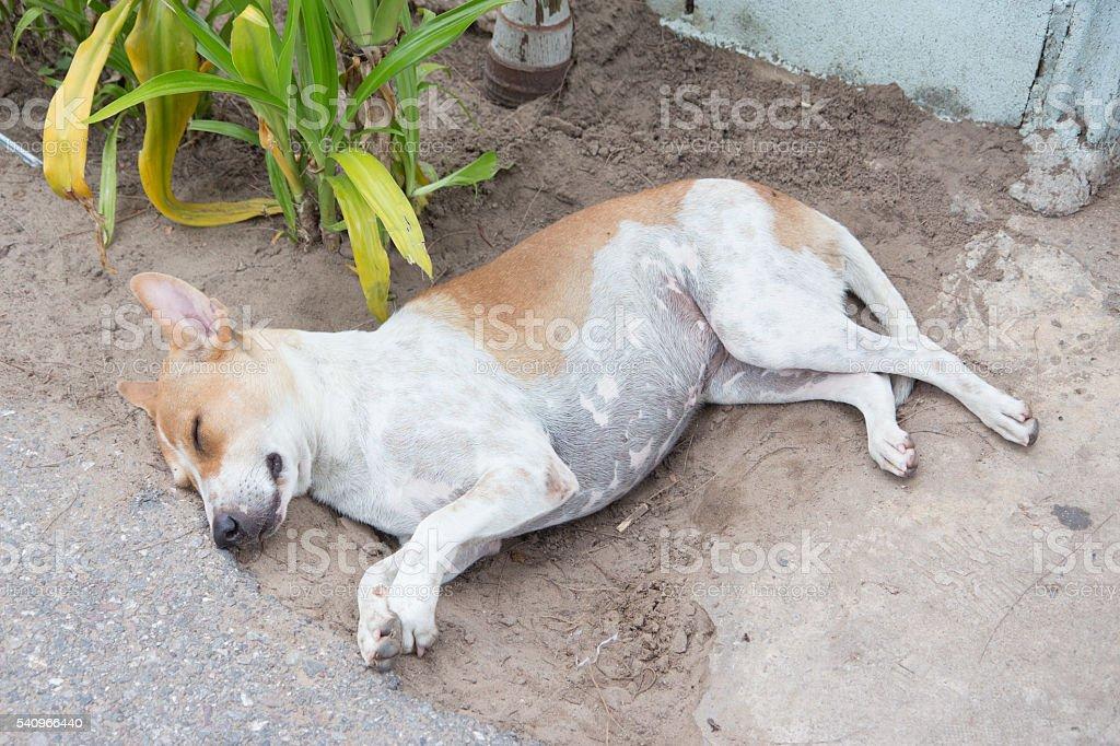 happy dirty stray fat dog sleep in soil feel comfortable Стоковые фото Стоковая фотография