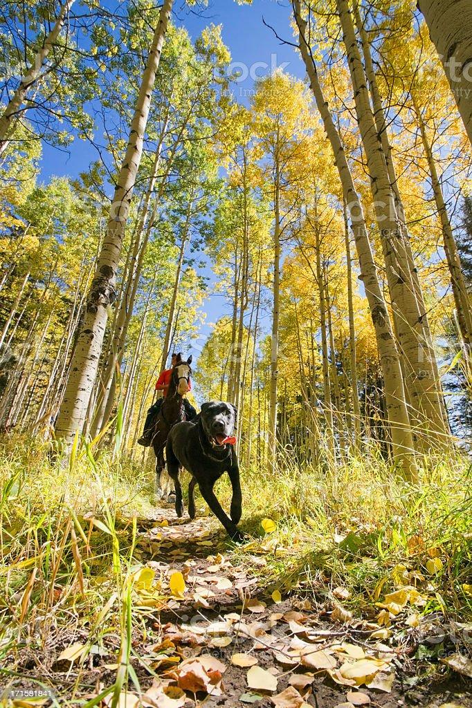 happy dog and horseback riding autumn landscape stock photo