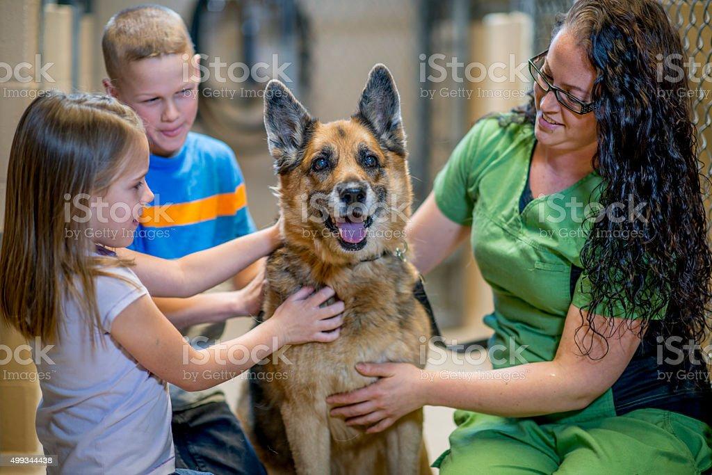 Happy Dog at the Animal Shelter stock photo