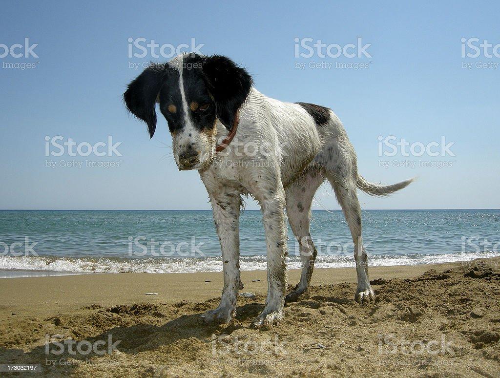 happy dog in a beach stock photo