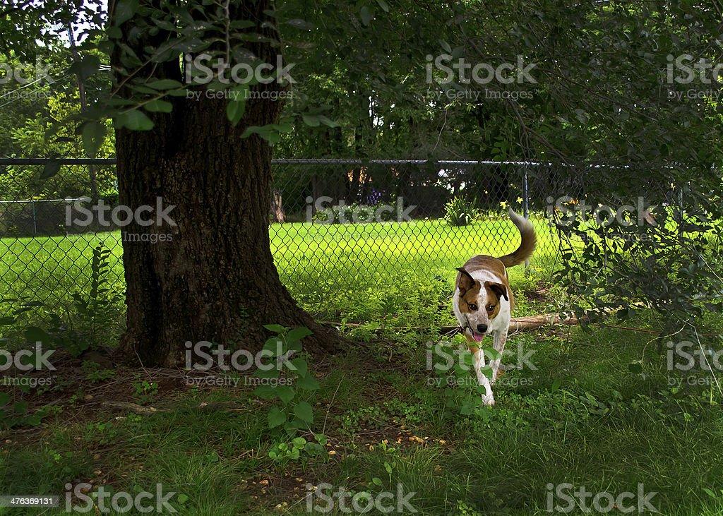 Happy Dog in Beautiful Yard royalty-free stock photo