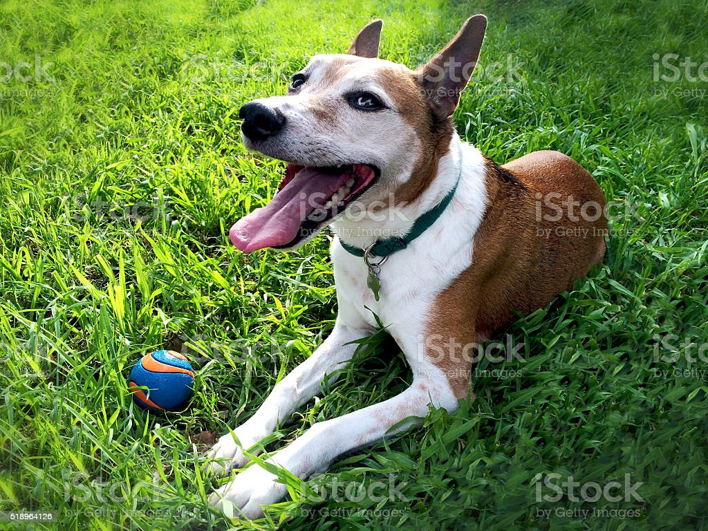 Happy Dog in Grass stock photo