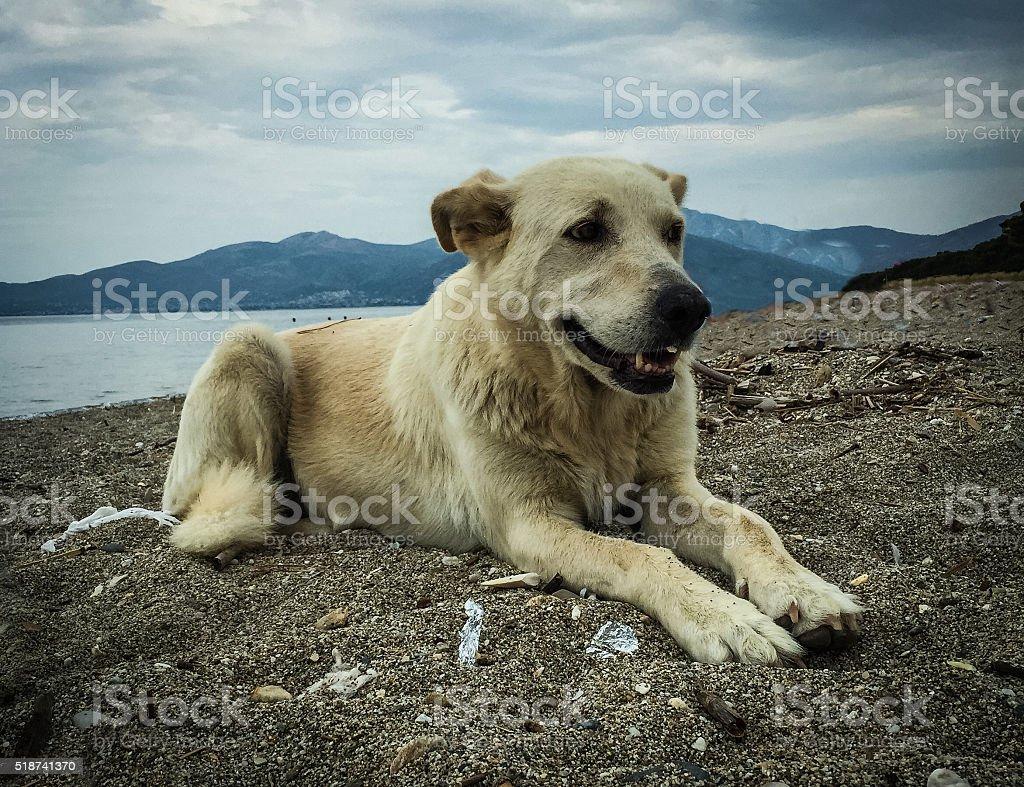 Chien heureux sur la plage photo libre de droits