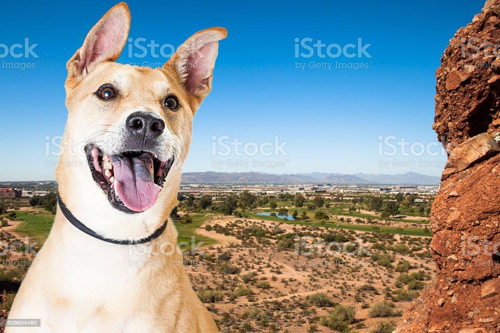 Happy Dog Overlooking Phoenix Arizona stock photo