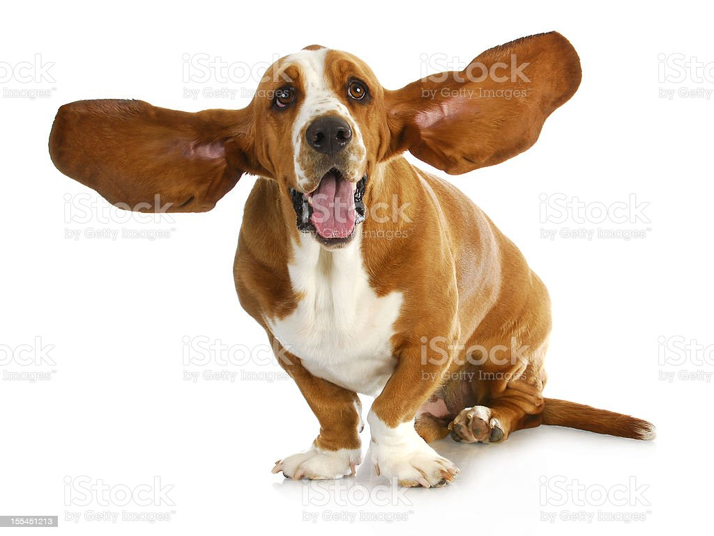 happy dog stock photo
