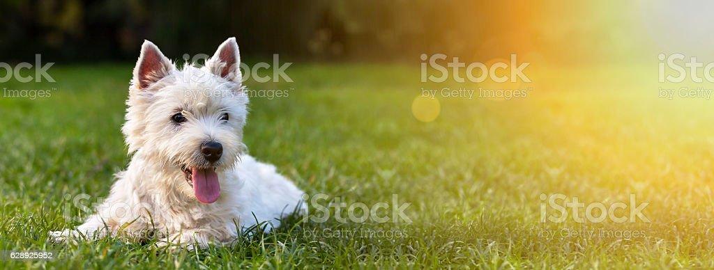 Happy dog puppy stock photo