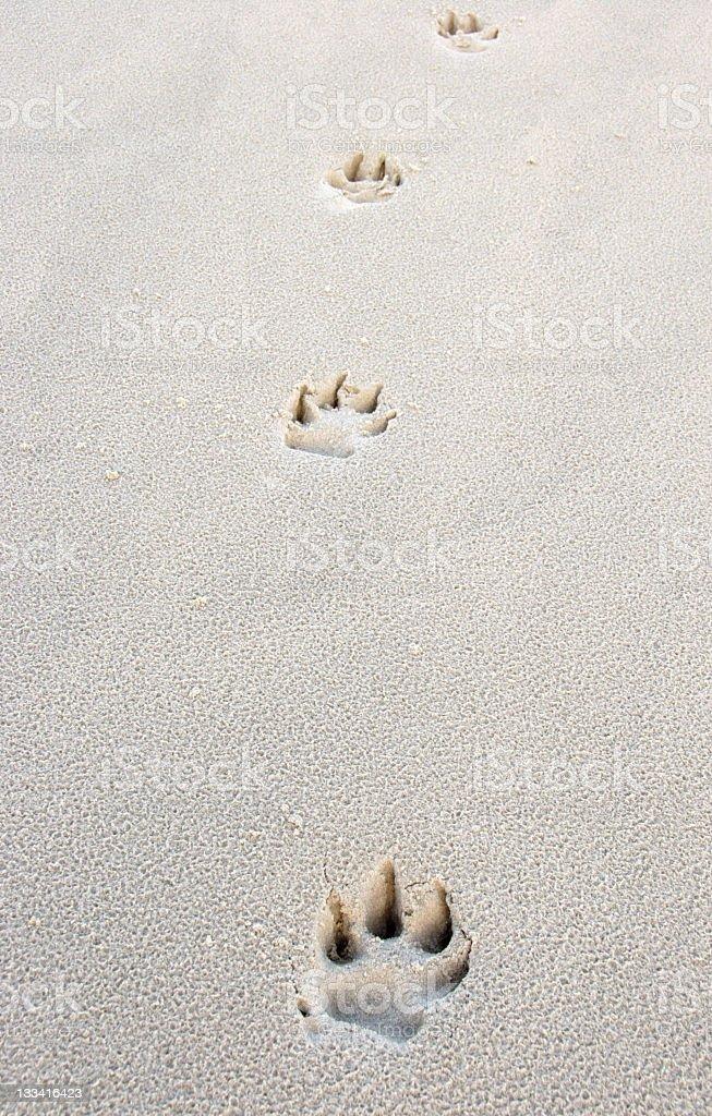 Happy Dog trail royalty-free stock photo