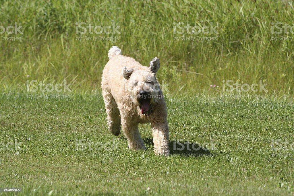 Happy Doggie! royalty-free stock photo