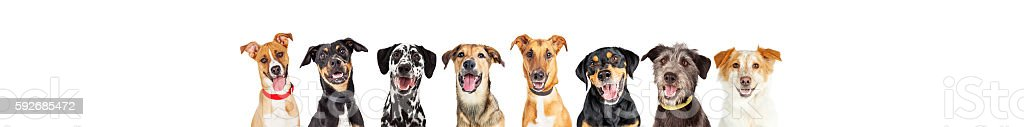 Happy Dogs In A Row - Leaderboard stock photo