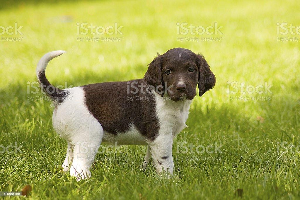 Happy dogs stock photo