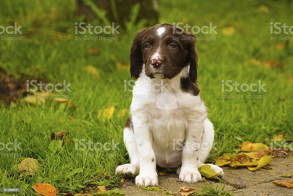 Happy dogs stock photo
